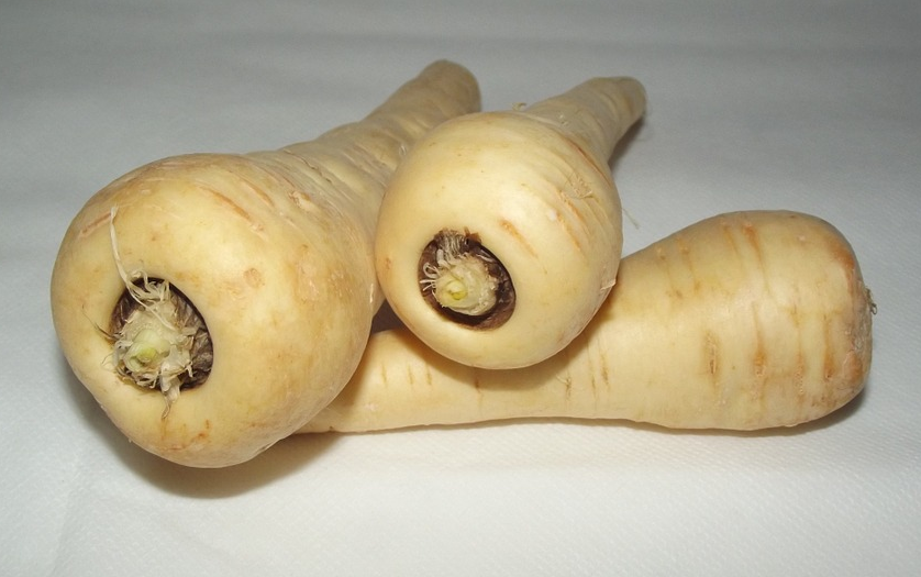 Cream-colored parsnips on a paper towel