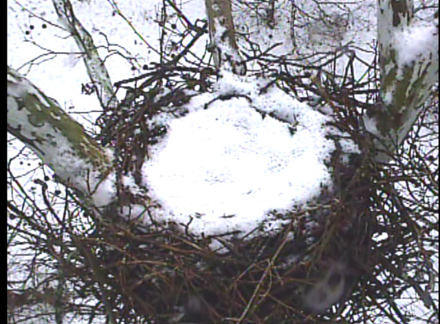 empty nest snow Screen Shot 2015-02-02 at 10.33.06 AM