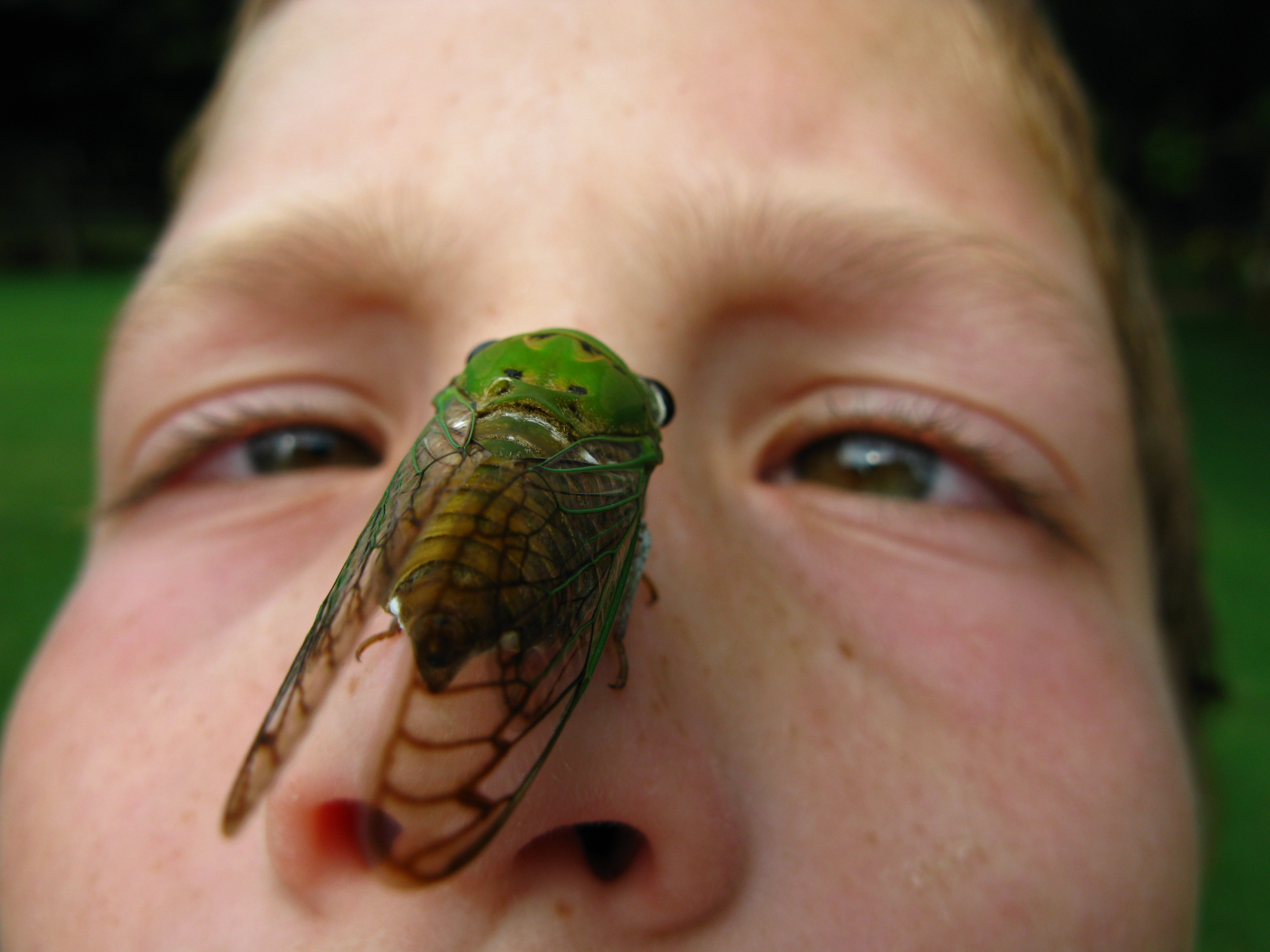 Don't be afraid of our cicada friends!