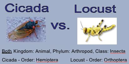 The Pennsylvania Department of Forestry knows the difference between cicadas and locusts - do you?