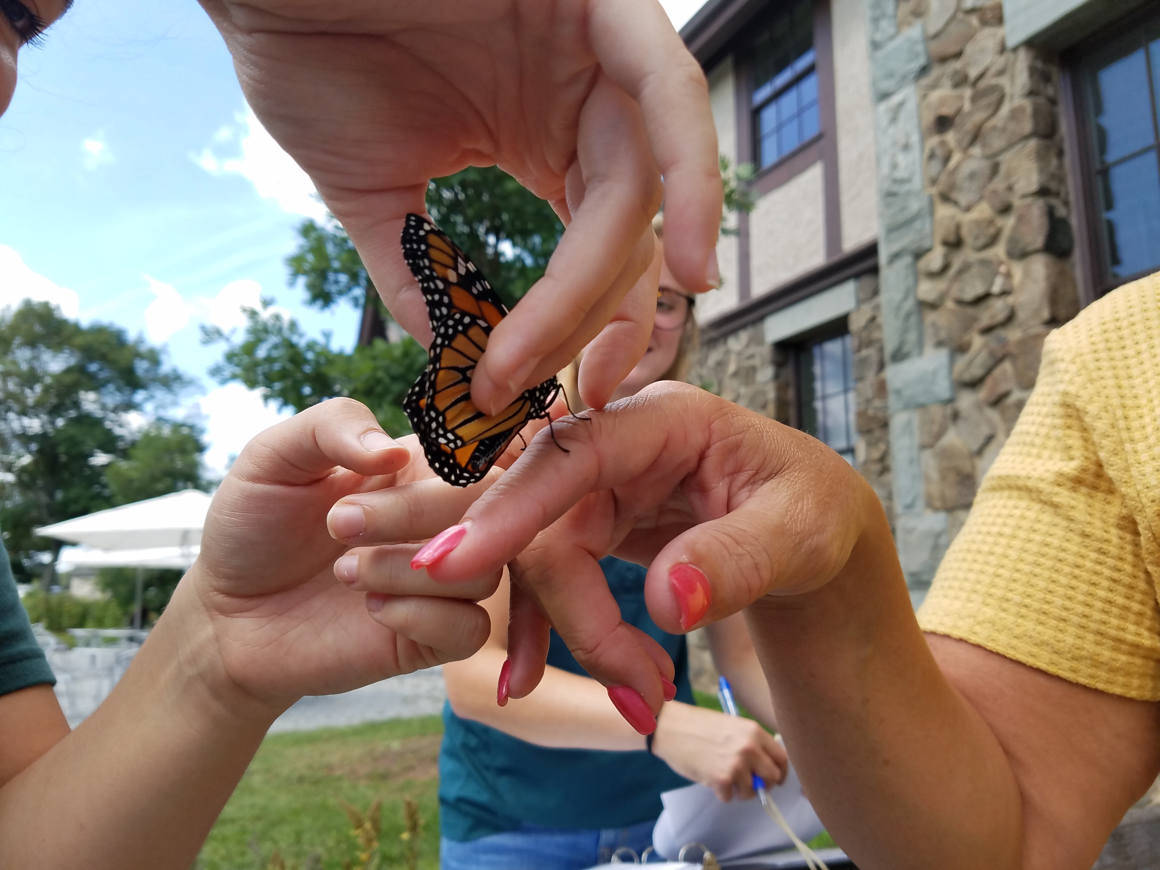 Kathleen's vibrant manicure rivals the gorgeous colors on a resident monarch