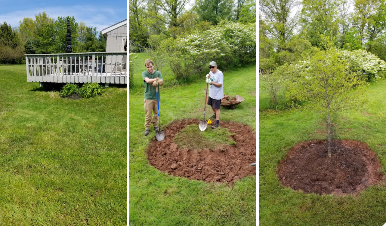 Before, during, and after rain garden construction