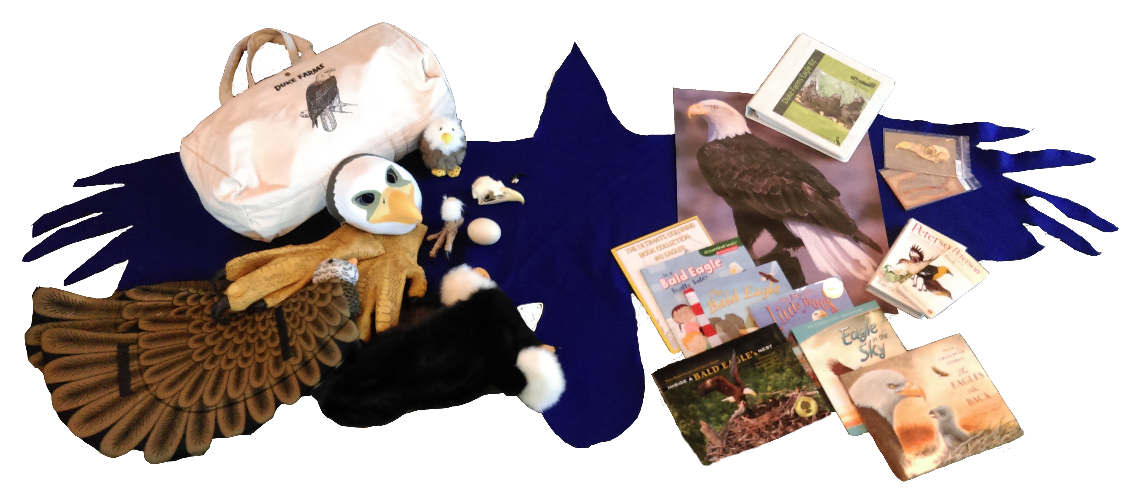 Eagle Kits for Classroom